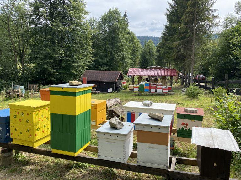 Včelárska nedeľa